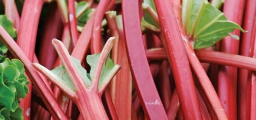 iRhubarb_Market