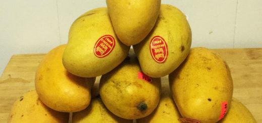 mango-stack